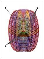 Суперпространство первого порядка, в котором существует квантование пространства по нескольким пространственным направлениям одновременно. При этом возникают системы пространств-вселенных (метавселенные)… (Иллюстрация из книги Николая Левашова)