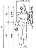 Рис_4_Почленные части трехчастного деления тела