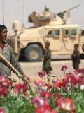 Американская государственная наркомафия выращивает отраву в Афгане