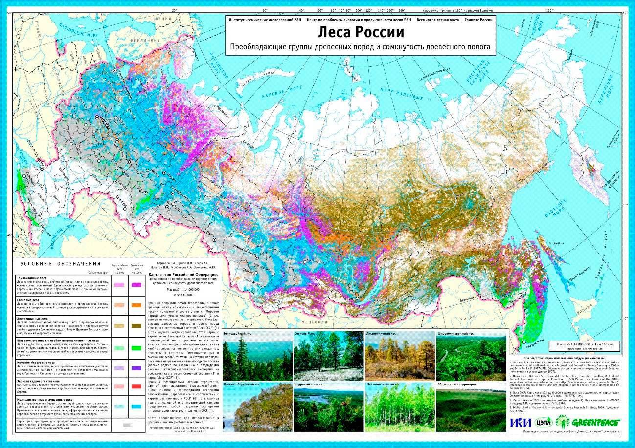 Рис.6.-Карта-лесов-России