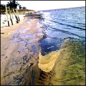 Метастазы Мексиканского залива-12-1