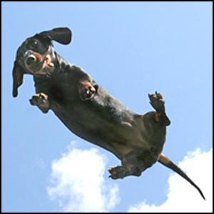 Про одну летающую собаку