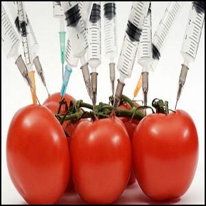 ГМО – это мощное оружие массового уничтожения людей и всего живого