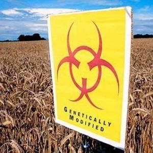 Массовое убийство населения нашей планеты с помощью ГМО