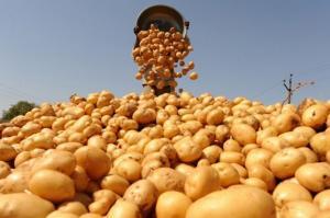 Импортозависимость России по картошке
