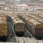 Как воруют «зелёное золото» России