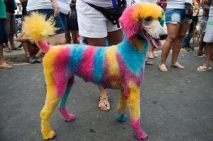 ЛГБТ пропаганда: гомосексуализм у животных – это норма