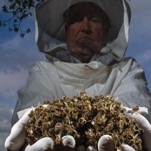 Удобрение глифосат или раундап уничтожает пчел и вызывает рак у людей