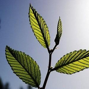 Растения имеют разум, могут мыслить и принимать решения, у них есть органы чувств