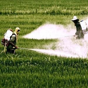 ГМО и пестициды разрушают почву