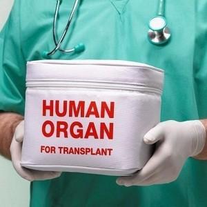 В США у нерожденных детей извлекают печень для трансплантации и торговли органами