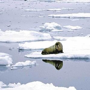 Глобальное потепление – афёра века