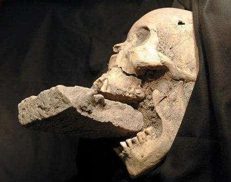9. Череп «вампира», найденный в ИталииАрхеологи нашли череп женщины, умершей от чумы. Её челюсти были принудительно раздвинуты с помощью камня. Это было частью средневекового обряда экзорцизма, которому подвергали тех, кого подозревали в вампиризме.