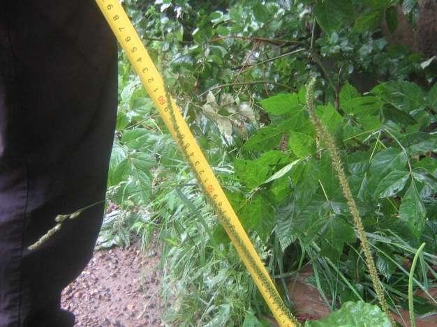 Светл-Флора или Буратино собирает урожай
