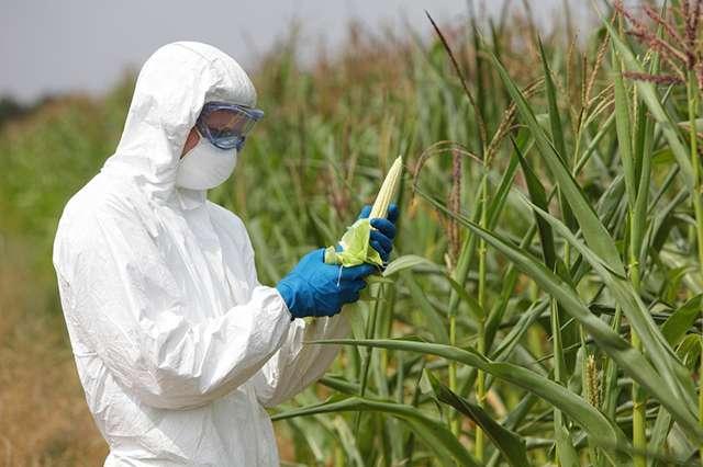 Генная «инженерия» и ГМО продукты – орудие геноцида населения нашей планеты