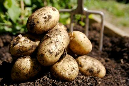 ГМО – биологическое оружие массового поражения, применяемое для сокращения населения height=282