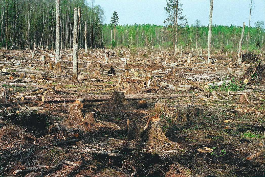 Как заработать на экспорте леса как зарабатывать в кс го реальные деньги