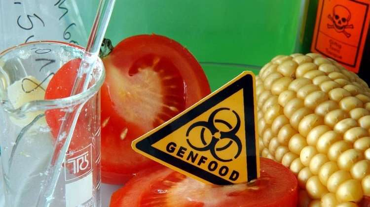 ГМО помидор убил европейца