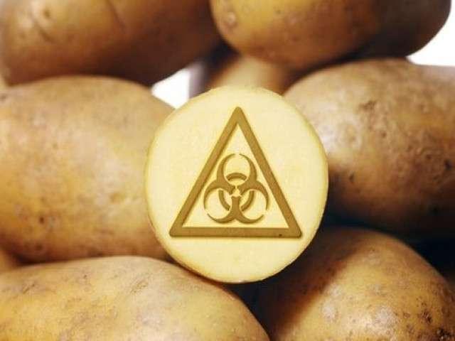 Ипортозависимость по картошке