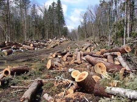 Картинки по запросу рубят лес россии картинки