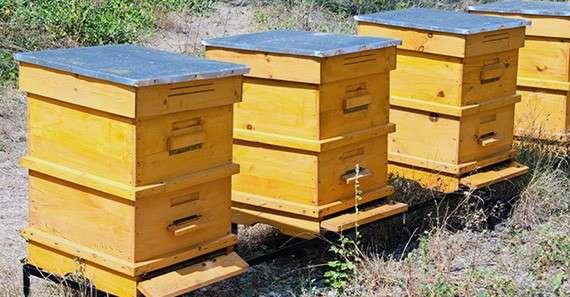 Удобрение глифосат уничтожает пчел