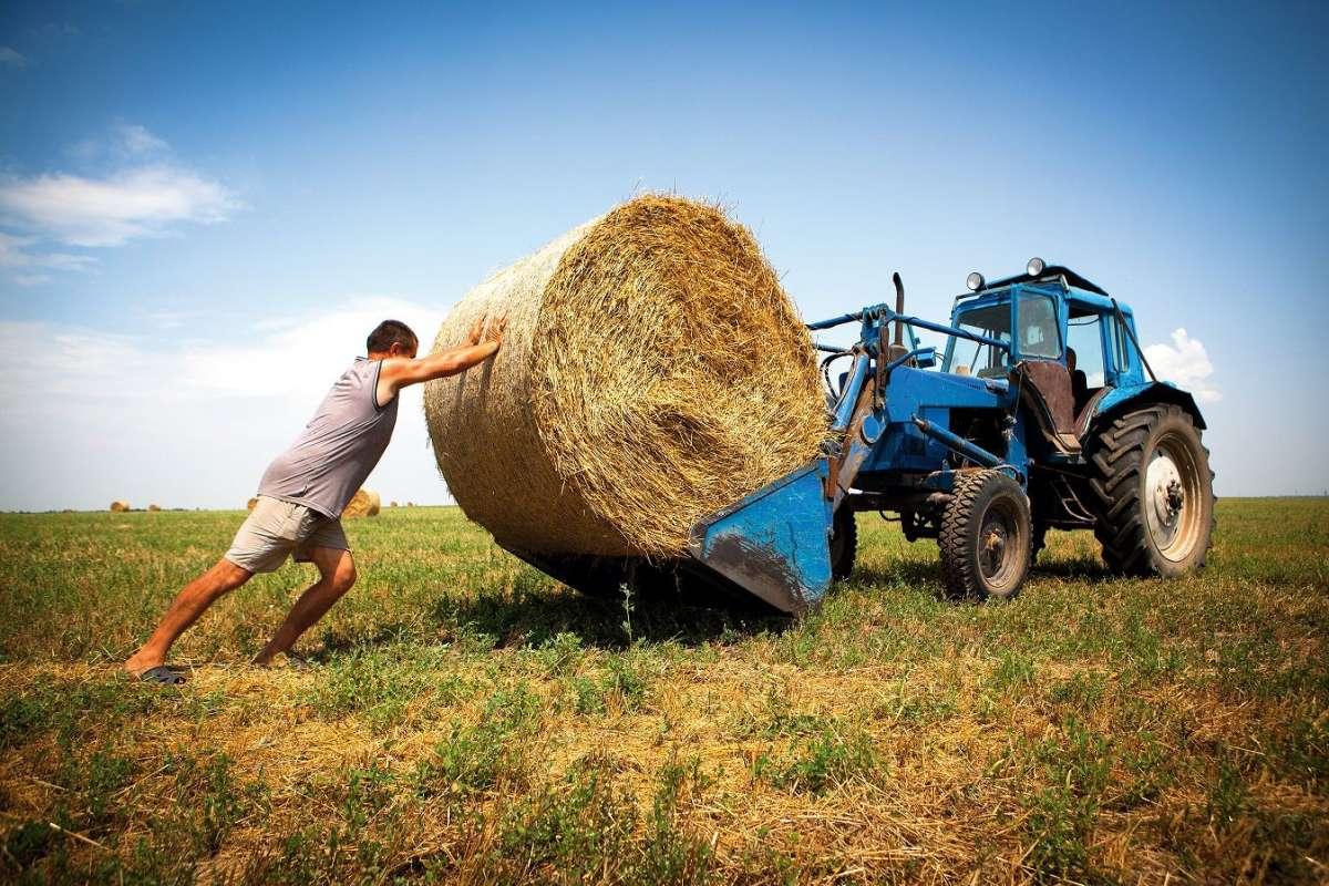 Ставка на малый бизнес, фермерские хозяйства и иностранные инвестиции – путь к утрате суверенитета