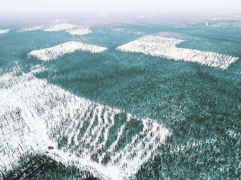 Как китайцы вырубают лес в Сибири и зачем им нужно столько нашего леса