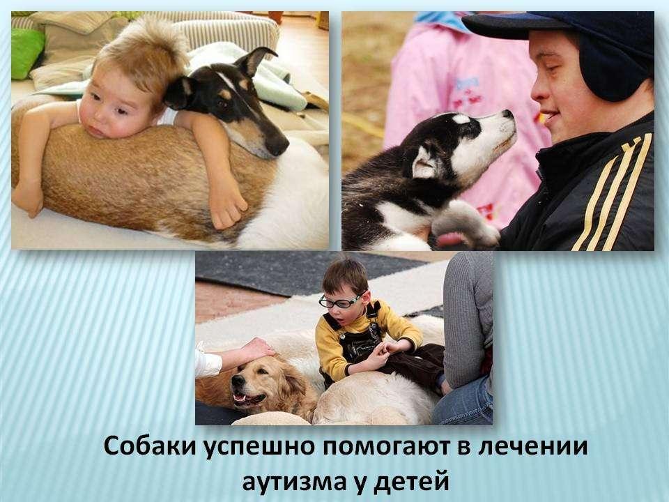 От вакцинации страдают и домашние животные, у них обнаруживают аутизм