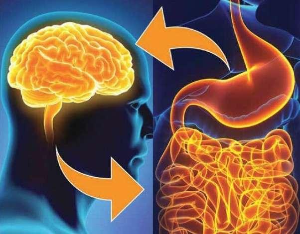 Мозг и кишечник связаны между собой и оба влияют на иммунитет организма