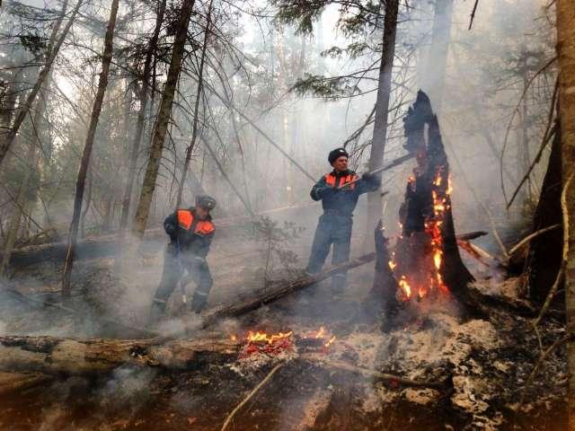 Лесные пожары в Сибири: пример технологии создания демонов для давления на власть