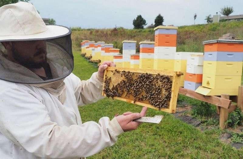 Массовая гибель пчёл угрожает пчеловодству в России