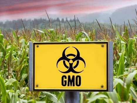 ГМО и пестициды разрушают почву и делает ее мертвой