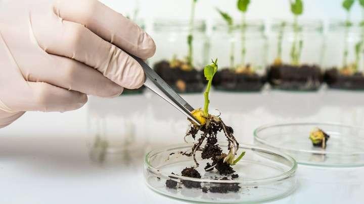 Новый ГМО в России. Роспотребнадзор официально разрешил есть больше химикатов