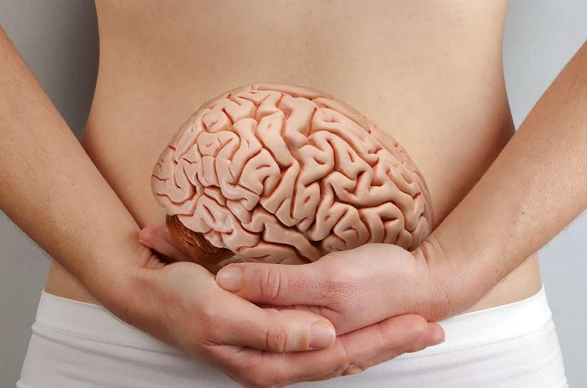 Кишечник – ваш второй мозг, влияющий на поведение человека
