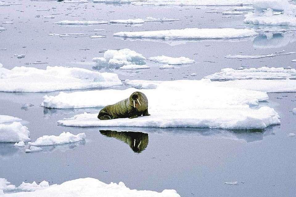 Глобальное потепление – афёра века, придуманная на Западе