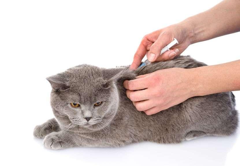 Вакцины для домашних животных и людей заражены ретровирусами