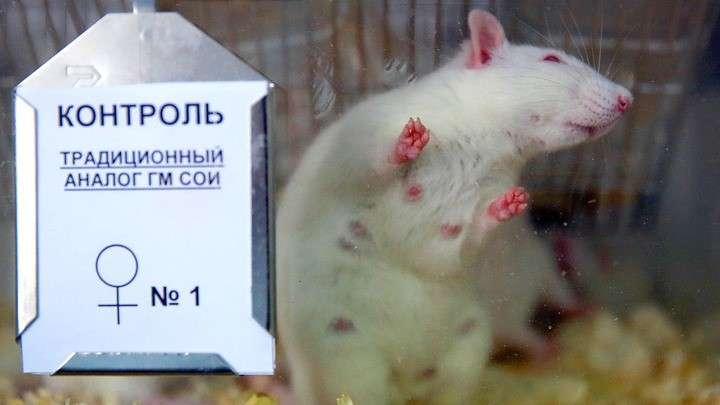 Российские чиновники помогают США уничтожать наше сельское хозяйство ГМО отравой