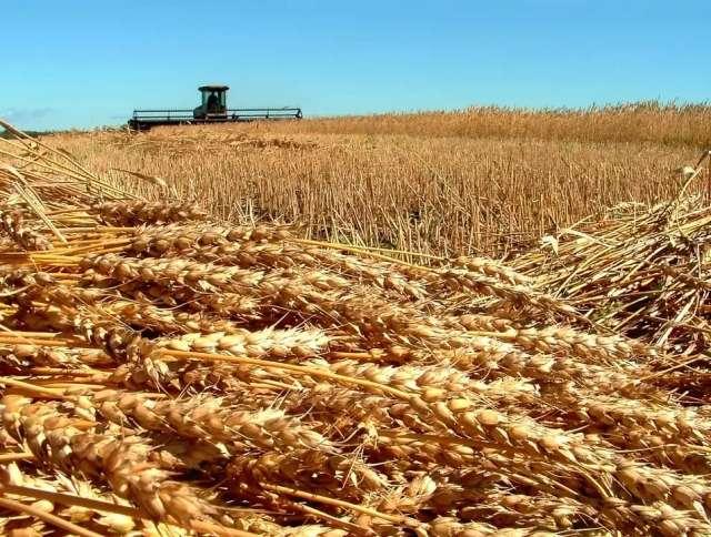 Агрохолдинг в Поволжье поймали на выращивание рапса с ГМО