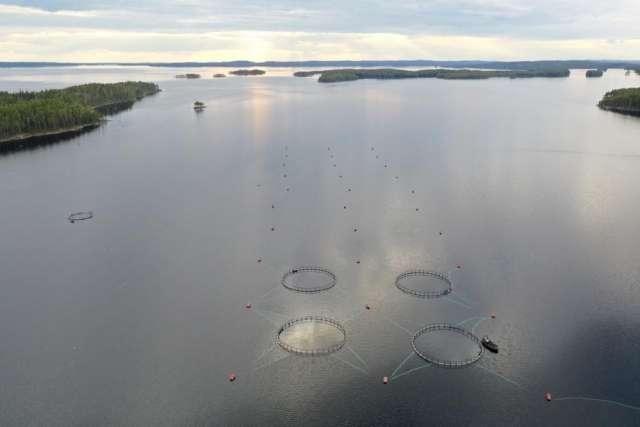 Замалчиваемая экологическая катастрофа, в которой замешан брат губернатора Московской области Андрея Воробьёва