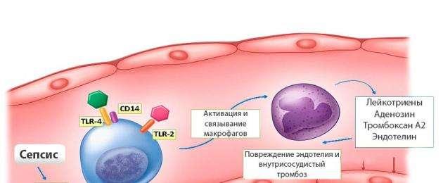 Сепсис – тревожные факты, одна из ведущих заболеваний ведущих к смертности