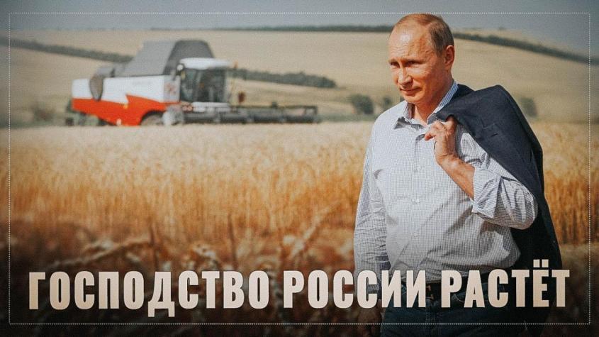 Взгляд из США. Блумберг о господстве России на мировом рынке пшеницы