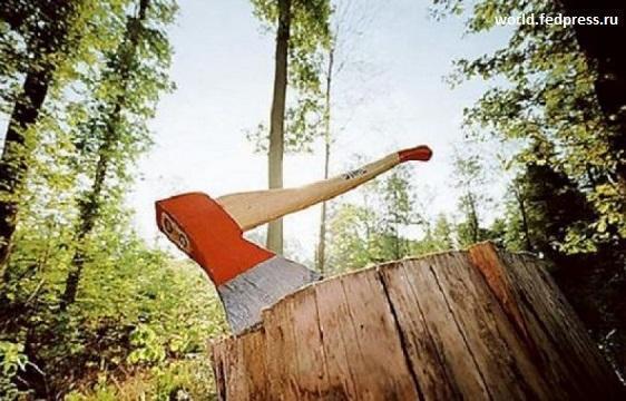 Финляндия болезнено восприняла запрет Путина на вывоз необработанной древесины