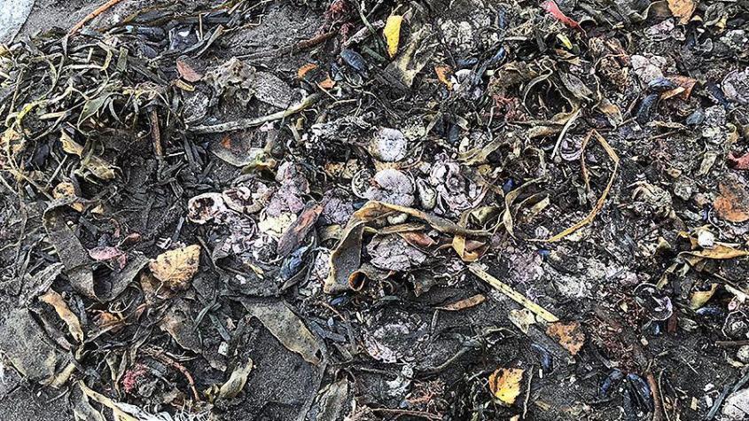 Экологическая катастрофа на Камчатке. Что произошло с Тихим океаном?