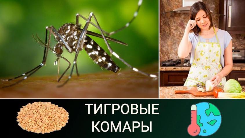 Россия доминирует на рынке пшеницы. Тигровые комары атакуют Турцию. Завалим мир луком!