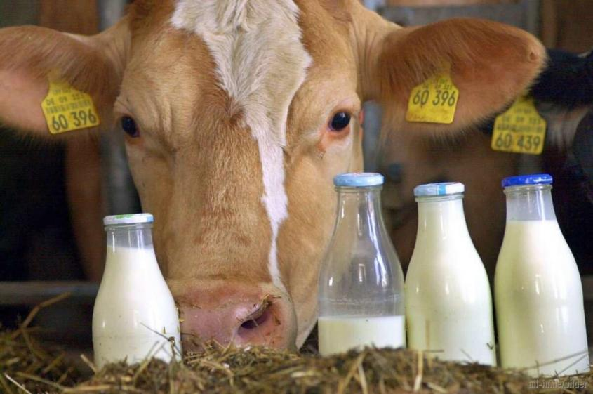 Россия впервые в истории достигает полного самообеспечения по производству молока