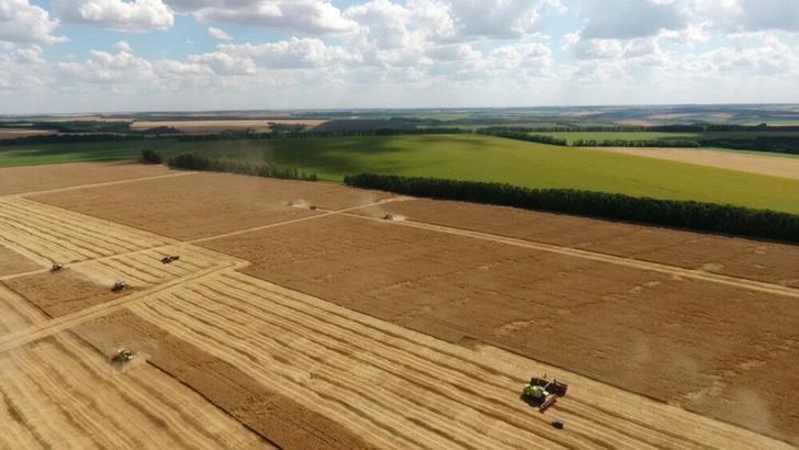 Воронежская область поставила исторический рекорд в урожае зерна