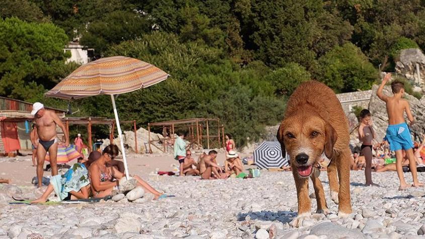 В России с 2021 года запретят брать животных на пляжи