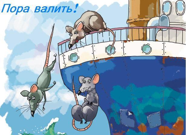 Исповедь одной московской крысы