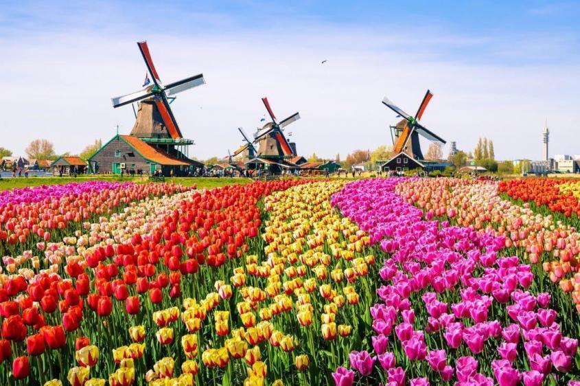 Новости из «цивилизованной» Голландии – удивительной страны-паразита