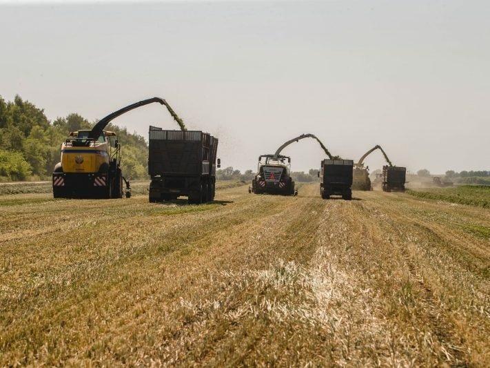 В Курской области собран рекордный урожай зерна
